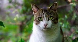 Koty z Grochowa [WOLONTARIAT]