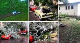 drzewa-na-pradze-poludnie-padaja-kilka-groznych-wypadkow-w-ostatnich-dniach