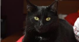 Szukamy kotki z Saskiej Kępy